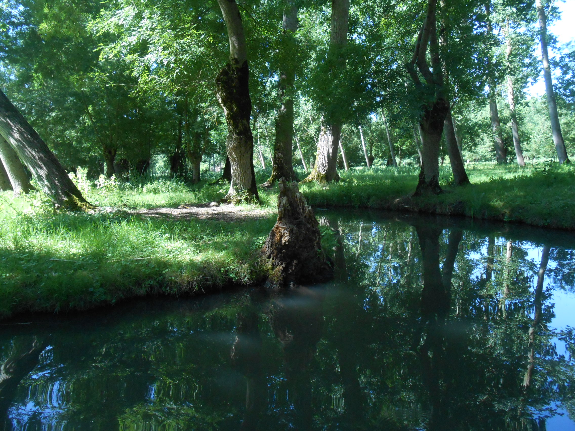 Voyage au Marais Poitevin